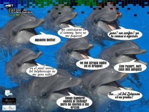 Hermosos-delfines